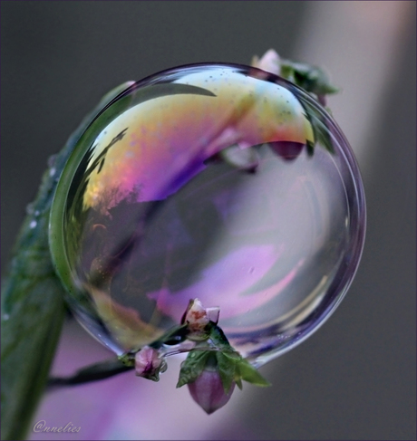 zeepbel...