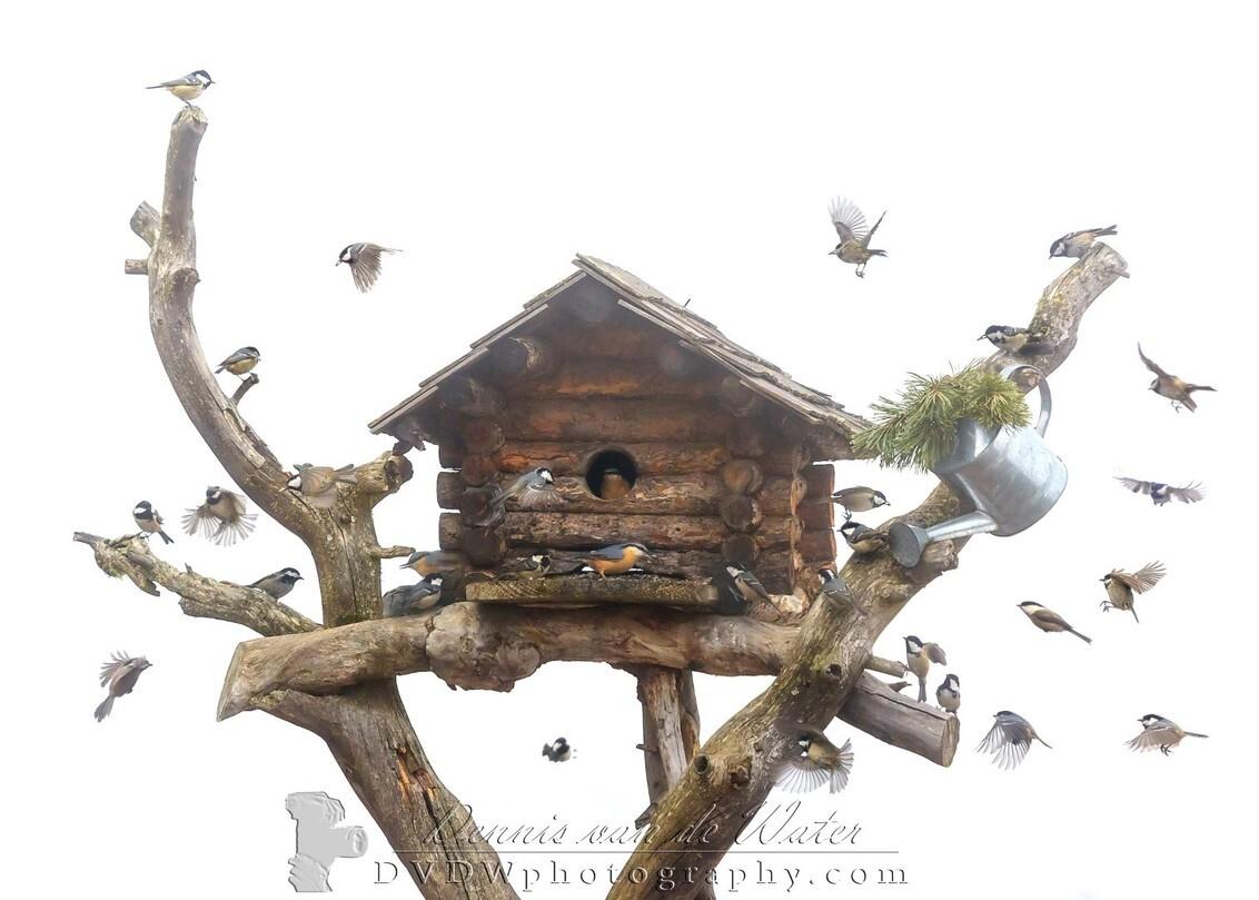 Collage van mezen en een boomklever bij een vogelhuis - Kleine selectie van onze vakantie naar de Dolomieten in 2016    https://dvdwphotography.com/2019/01/31/skiing-in-the-dolomites/  https://www.ins - foto door dennisvdwater op 31-01-2019 - deze foto bevat: natuur, vogels, dieren, vogel, boomklever, koolmees, collage, mezen, wildlife, vogelhuis