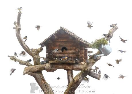 Collage van mezen en een boomklever bij een vogelhuis