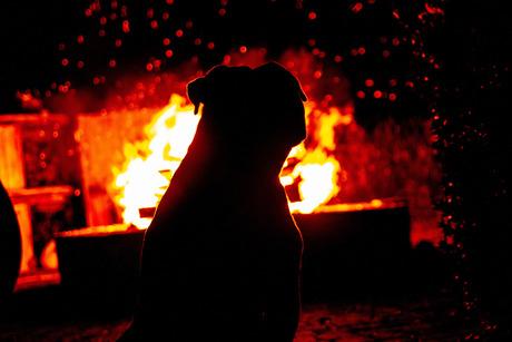 Dog&Fire