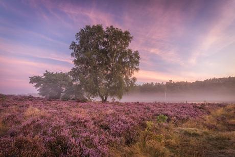 Dutch Heath