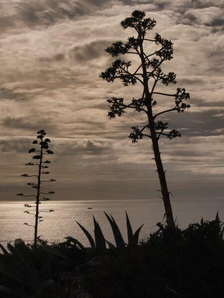 Warme glinstering - Zon, zee, wolken en planten. Wat wil je nog meer? Tuurlijk, een visser! - foto door rekel op 23-11-2019 - deze foto bevat: lucht, zee, visser, reisfotografie, europa