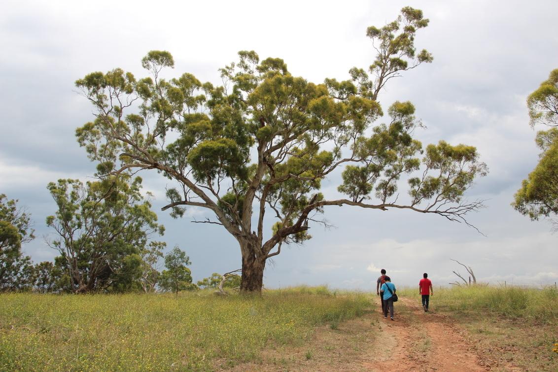 Nieuw land - Mijn Indiase, Chinese en Maleisische huisgenoten en ik kwamen allemaal naar Australië om te studeren en onze grenzen te verleggen. - foto door Laurier op 09-07-2015 - deze foto bevat: lucht, wolken, zon, boom, natuur, licht, vakantie, reizen, landschap, bos, bomen, bergen, avontuur, reis, australie, wandelen