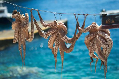 Verse Calamari