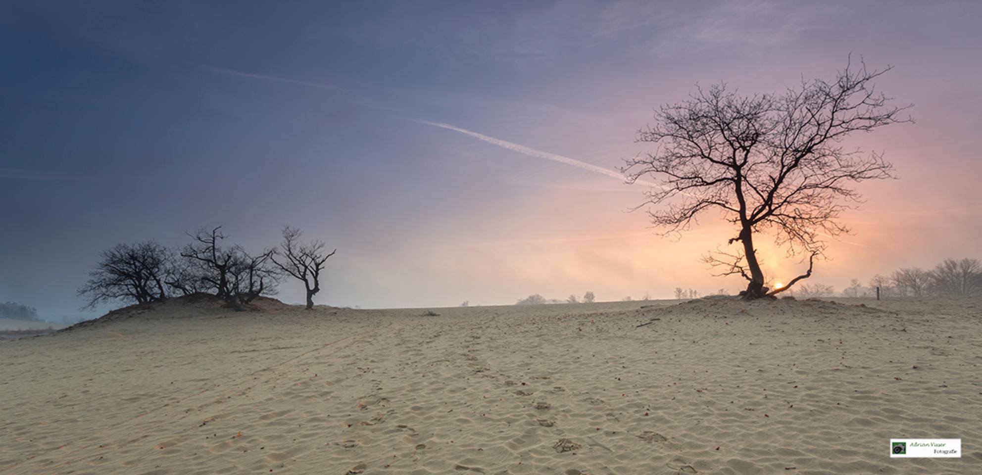 Zonsopkomst Loonse en Drunense duinen. - Afgelopen zaterdag met Jan Koppelaar naar de Loonse en Drunense duinen geweest. Tijdens de heenreis een dichte mist, op locatie trok de mist snel weg - foto door Aad1984 op 29-03-2016 - deze foto bevat: lucht, wolken, zon, strand, panorama, lente, natuur, licht, landschap, mist, heide, duinen, bos, tegenlicht, zonsopkomst, bomen, zand, loonse en drunense duinen