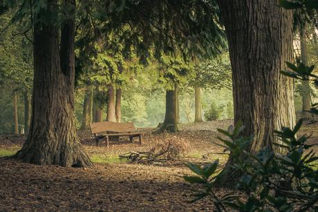 Zomaar een plekje in een sprookjesbos