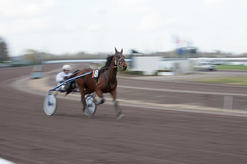 horse in action - horse-9021.jpg - foto door dickyclaeys op 04-03-2014