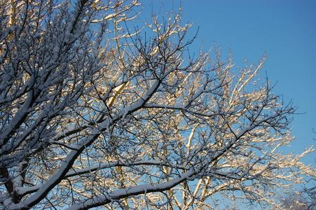 sneeuw en blauwe lucht