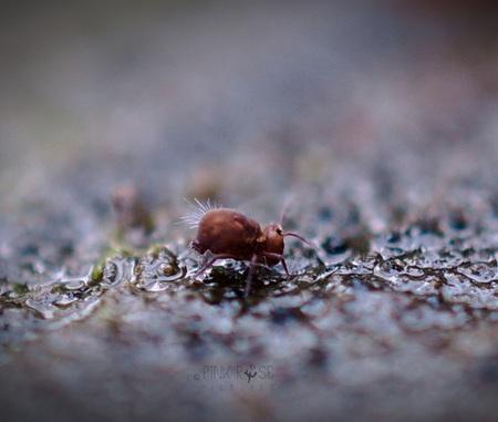 Best friend - Best friend - foto door PinkRosePictures op 08-03-2021 - deze foto bevat: macro, natuur, winter, insect, springstaart