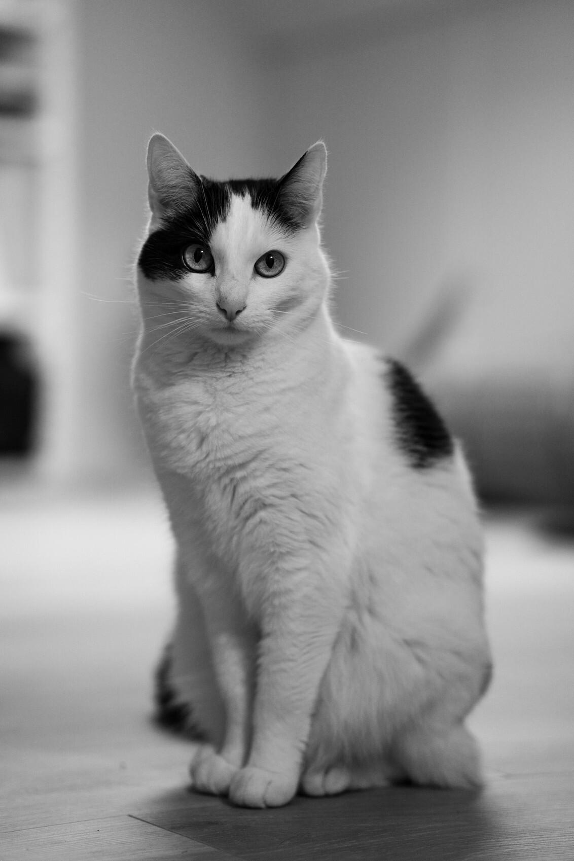 Luna - - - foto door Ekrul op 05-02-2020 - deze foto bevat: wit, esther, black, poes, zwart, huisdier, kat, dier, lief, zw, mooi, luna, jong, bw, white, vlekjes, krul, fotografie, cat, schattig, huisdierfotografie, vlek, estherkrul, eskrul