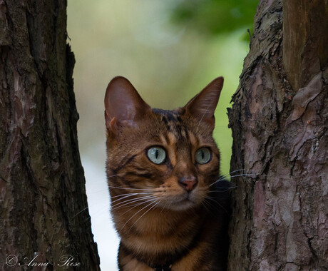 Nationale kattendag