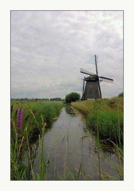 hollands glorie 3