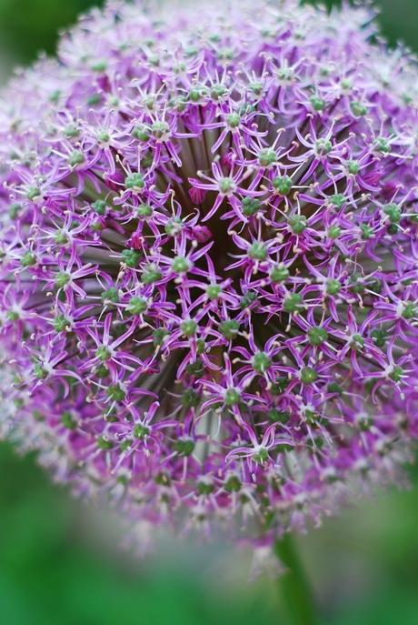 Flower 1.8