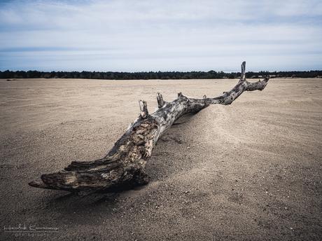 Wooden desert