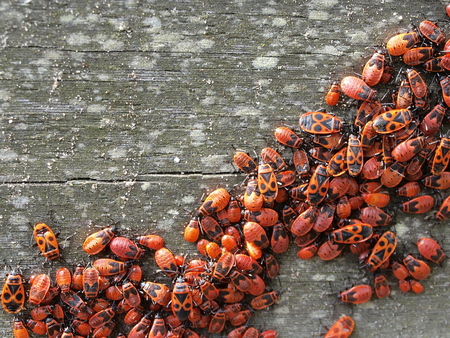 Wantsen .... - ...op de brug van de Burcht.  in alle fase,s en nieuwe waren ook al weer in de maak :d  Iedereen bedankt voor de reacties op de vorige foto,s   vr - foto door j.bosch.01 op 26-07-2015 - deze foto bevat: macro, natuur, dieren, insect, nederland