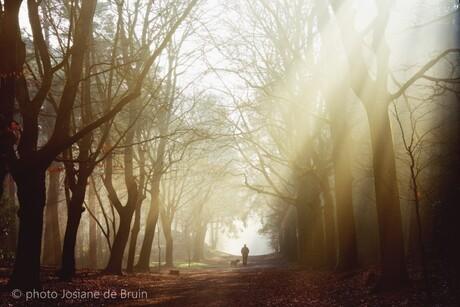 Wandelen met de hond in de vroege ochtendlicht