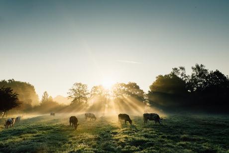 Sun Streaming in Foggy Field