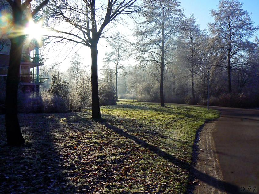 Crystal White 4 - 22 december Hoogeveen  En toen, op 22 december, werd het alleen nog maar beter. De zon kwam achter de wolken vandaan en het schouwspel werd nog spe - foto door daniel44 op 28-12-2007 - deze foto bevat: wit, zon, natuur, park, rijp, ijs, mist, koud, daniel44