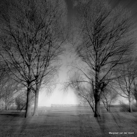 Licht en bomen