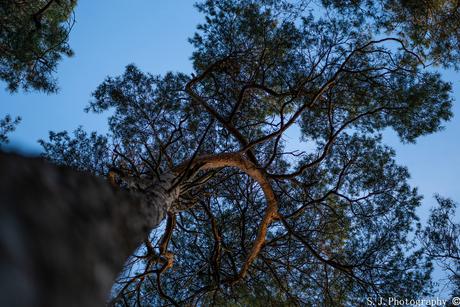 Tree to the sky