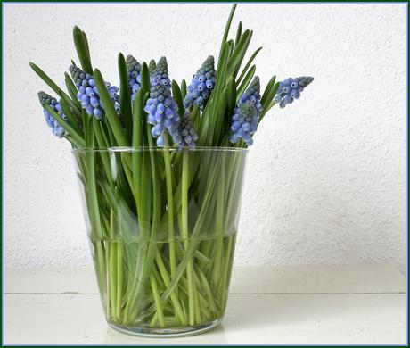 * blauwe druifjes *