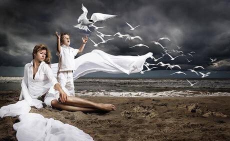 seagull`s family