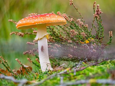 Herfst - Ermelo, de herfst is begonnen - foto door MichelvR op 02-11-2019 - deze foto bevat: paddestoel
