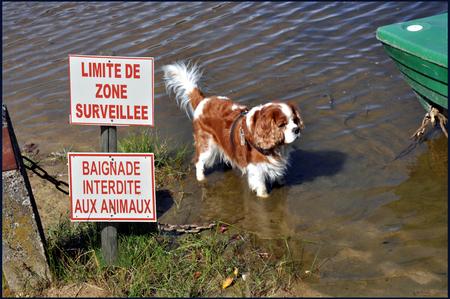 pootje baden - maar pootje baden zal toch wel mogen ? - foto door boddeus E-L op 15-01-2011 - deze foto bevat: hond, zwemmen, verboden