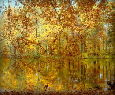 Glorieuze herfstkleuren (even groot bekijken)