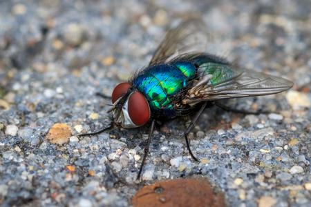Vlieg in de tuin - Een van de eerste foto's gemaakt om mn macro-lens uit te proberen. - foto door MigiloDiPilo op 26-06-2016 - deze foto bevat: macro, vlieg, tuin, canon 600D, sigma 105mm 2.8