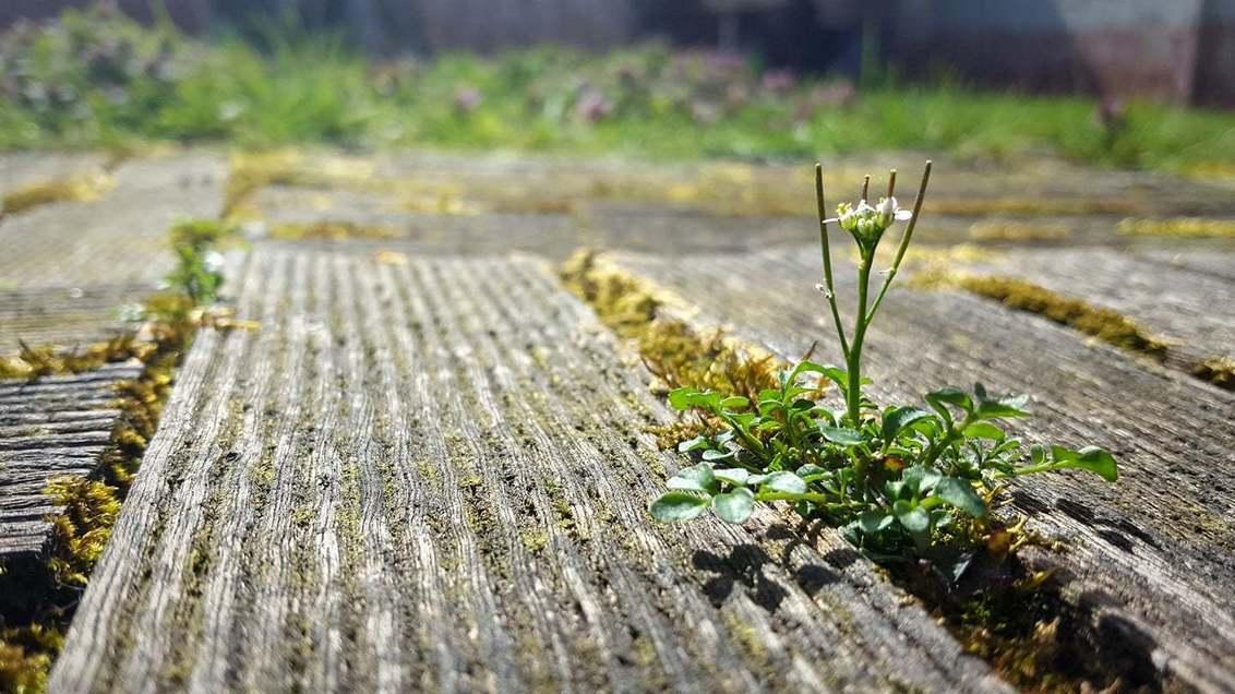 . . . Little happiness . . . - C4U on [url=https://www.facebook.com/pages/C4U/454353724628543?ref=hl]Facebook[/url] [url=http://chiandra4u.deviantart.com]DeviantART[/url] - foto door ChIandra4U op 09-04-2018 - deze foto bevat: zon, bloem, lente, klein, licht, tuin, geluk, chiandra4u, C4U, kleingeluk