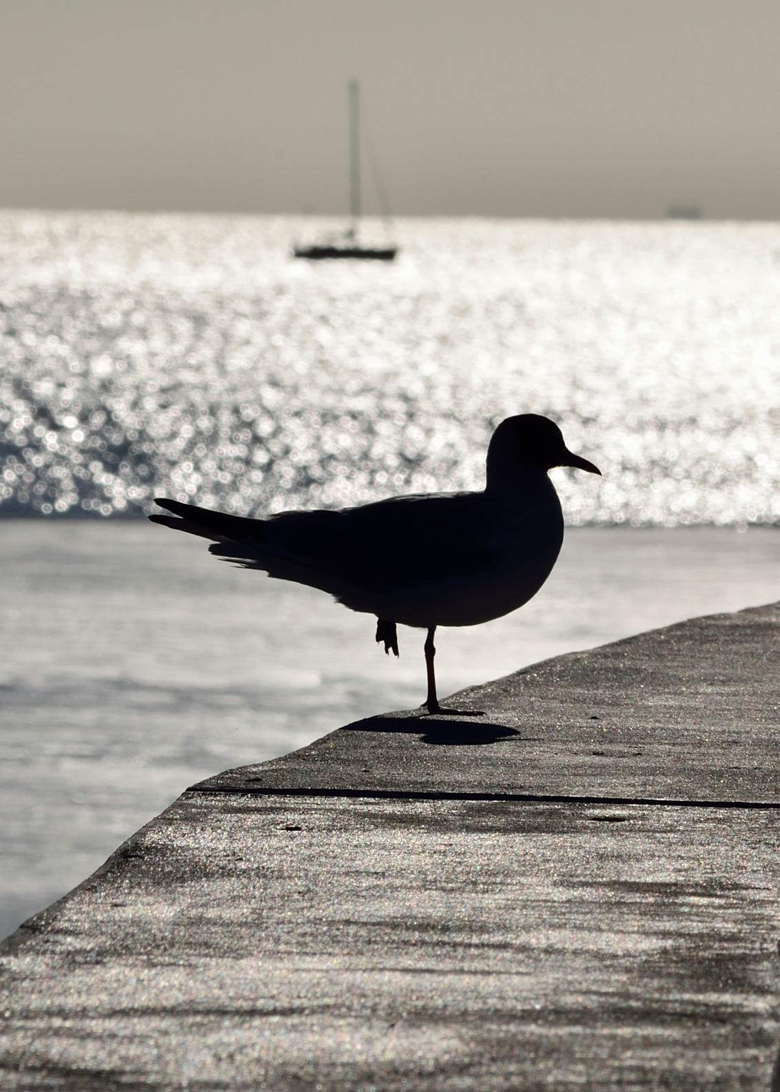 Op één been... - Op één been... - foto door aah op 09-07-2013 - deze foto bevat: zee, zonsondergang, zeemeeuw, pier