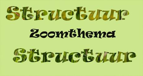 Zoomthema Structuur