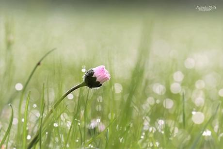 bloemetje in het gras