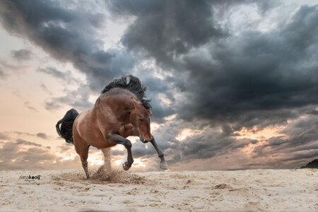 Wild horse - Dit prachtige Spaanse paard vast kunnen leggen in Portugal. - foto door riana op 07-06-2018 - deze foto bevat: paarden