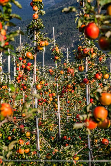 Appels en nog eens appels