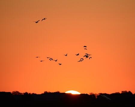 Eerste stralen van de zon - Een zwerm Grauwe Ganzen gaat op de wieken om naar de velden te vliegen waar zij hun eten kunnen vinden - foto door FocusV op 21-09-2020 - deze foto bevat: lucht, zon, strand, natuur, licht, herfst, dieren, landschap, duinen, nederland