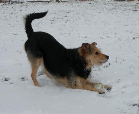 Shannon in de sneeuw