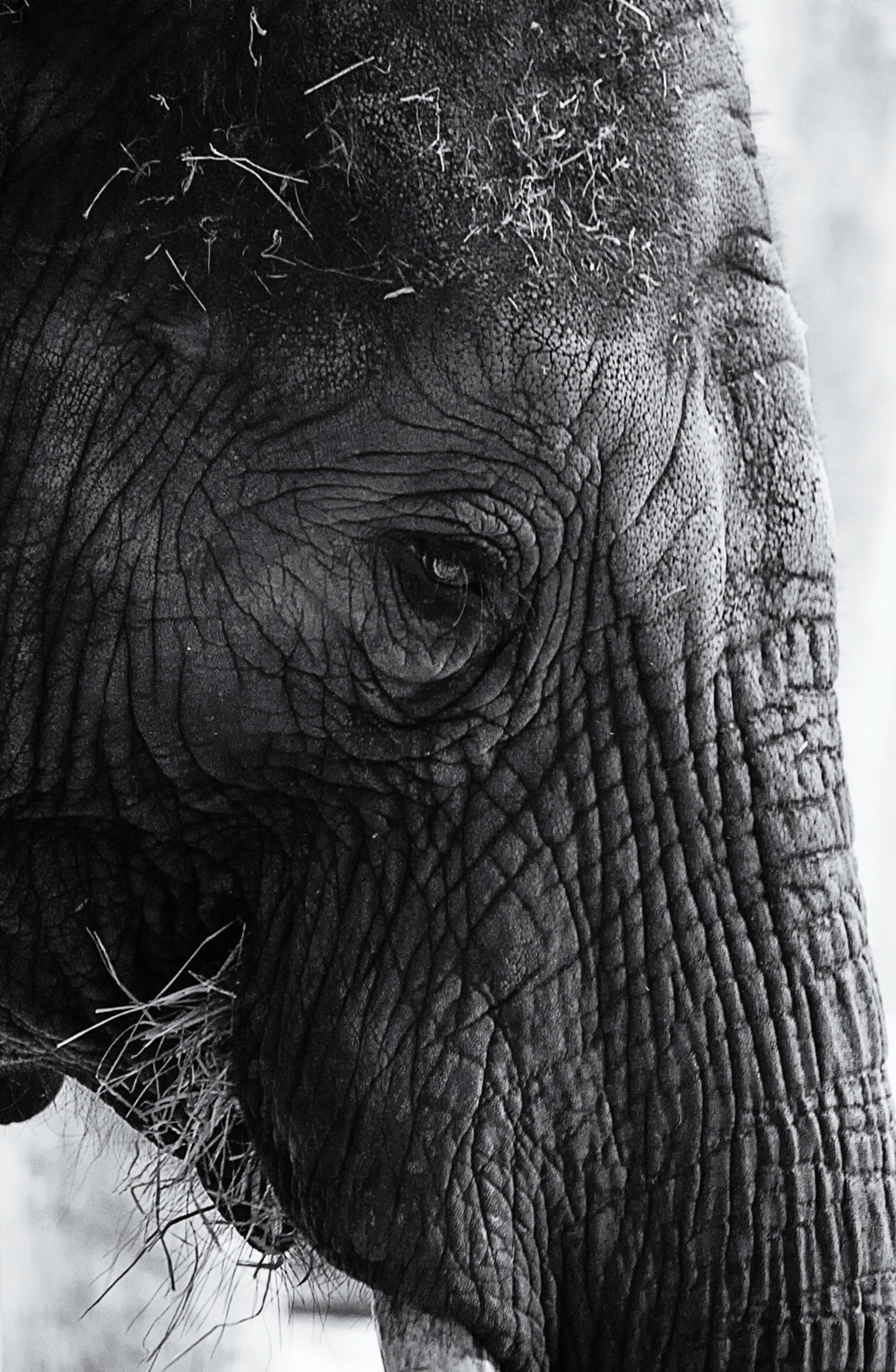 Olifant in Safaripark Beekse Bergen - Olifant in Safaripark Beekse Bergen - foto door canon85 op 29-02-2016 - deze foto bevat: dierentuin, dieren, safari, olifant, afrika, wildlife