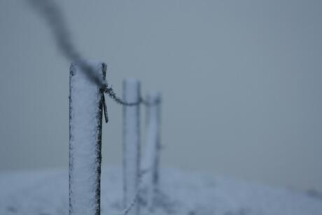winters prikkeldraad 2