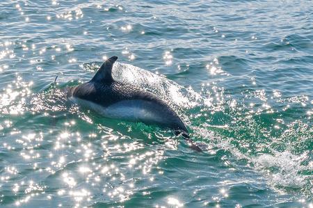 Dolfijn - - - foto door JG-Meijer op 28-02-2021 - deze foto bevat: zee, water, natuur, dolfijn, wildlife