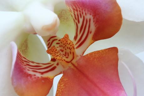 Orchideeeeeeee