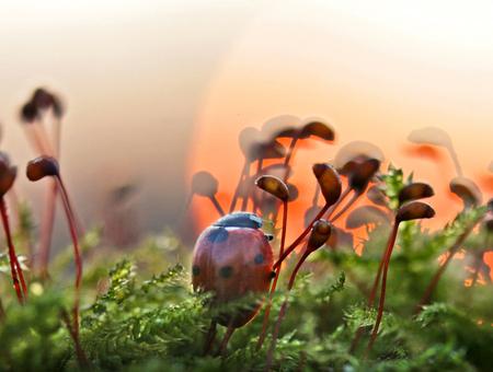 Zonsopkomst in t klein - het was een mooie zonsopkomst vandaag. groeten, Bert - foto door b.neeleman op 09-04-2016 - deze foto bevat: macro, lente, lieveheersbeestje, kever, oranje, zonsopkomst