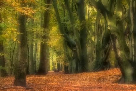 Clingendael in herfstkleuren