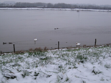 Eenden,zwanen,de IJssel & sneeuw