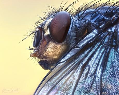 Extreme macro vlieg met vleugel