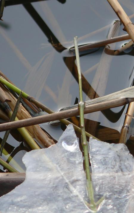 de winter wordt lente, onherroepelijk - - - foto door johntomeij op 26-01-2009 - deze foto bevat: ijs