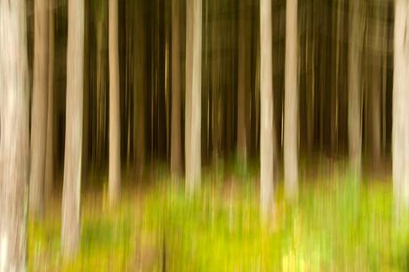 vluchtige bomen