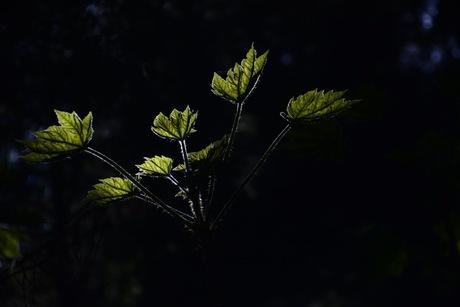 Bladeren in het zonlicht
