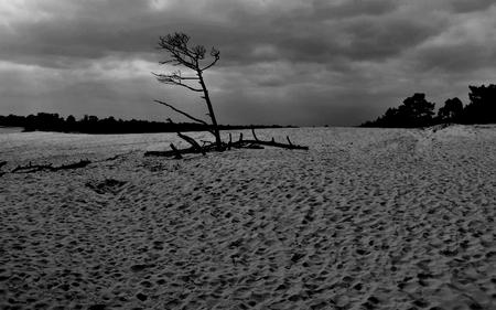 zwart/wit - op verzoek van Ali   in het zwart/wit - foto door majvangooreg op 04-04-2018 - deze foto bevat: zand